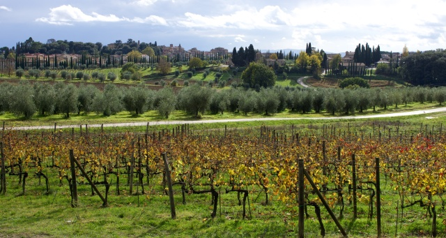 tuscany_vines